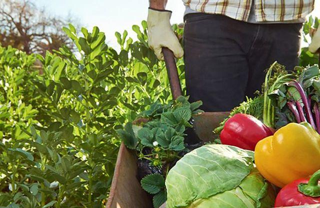 Activan protocolo para la agricultura familiar.