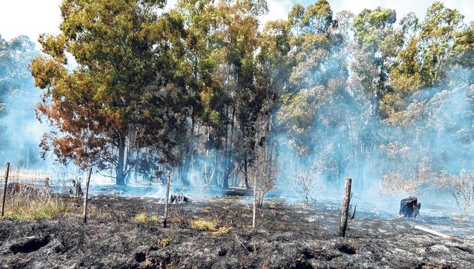 Pasto y árboles quemados, una imagen desoladora que generó preocupación en los vecinos del pueblo.