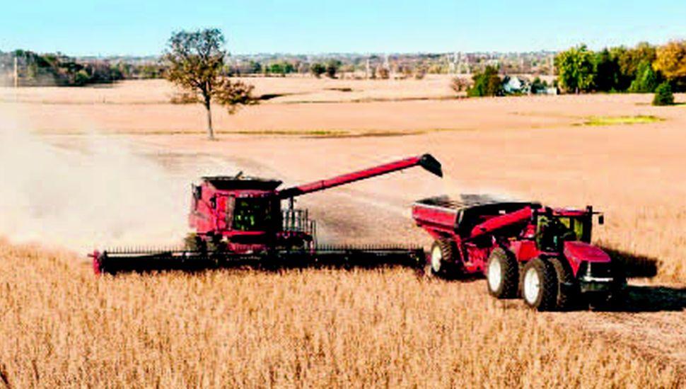 Los rendimientos de la soja superan las expectativas más optimistas.