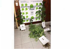 Arenales: lo detuvieron mientras regaba sus plantas de marihuana