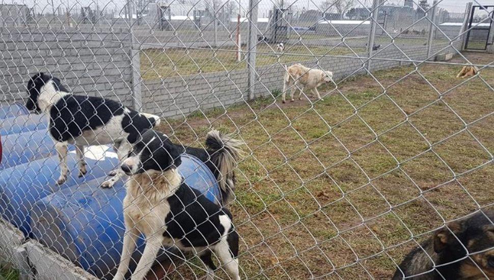 Refugio canino municipal: propuestas de la Protectora de Animales