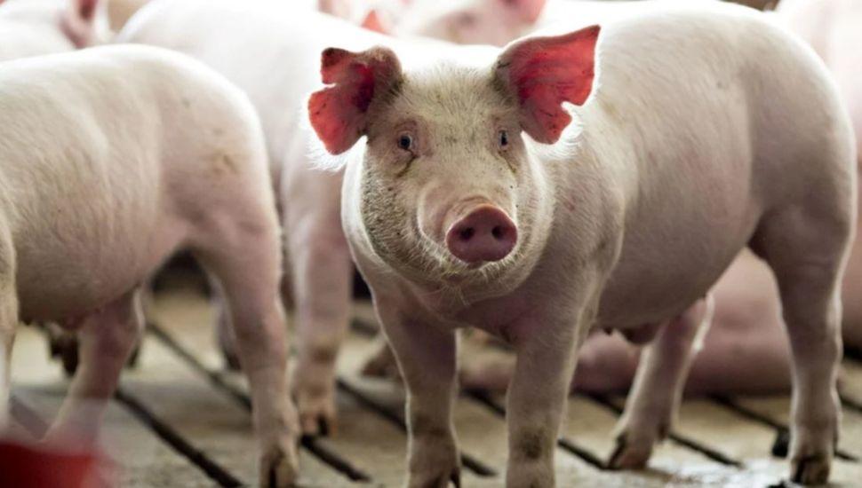 exportaciones cerdo