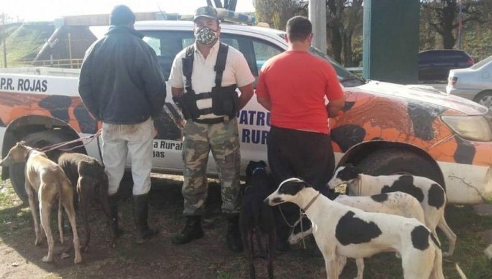 Cuatro demorados por cazar liebres con perros galgos