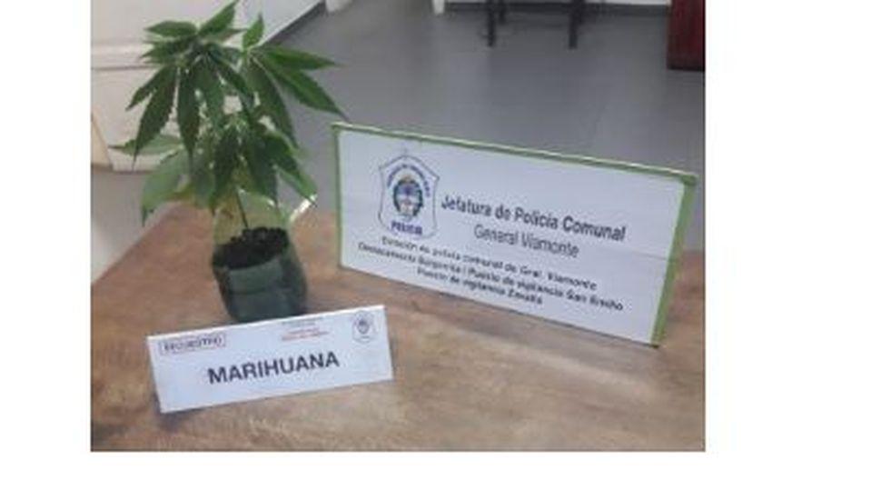 Allanaron una vivienda por robo y encontraron marihuana