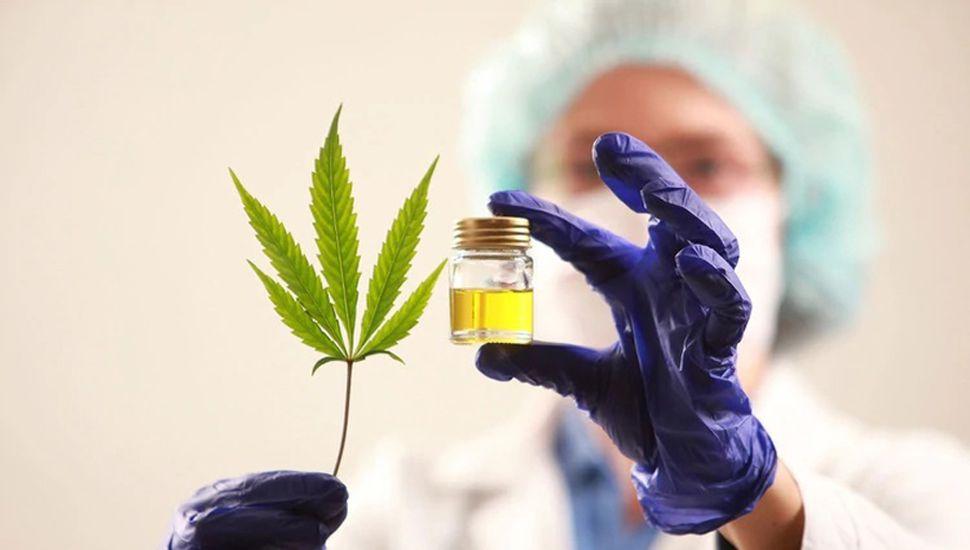 Solicitan que se autorice el circuito legal de fabricación del aceite de cannabis