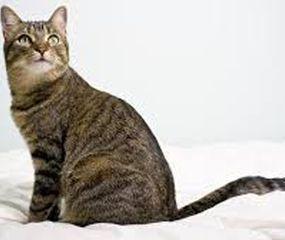 "Un gato contagiado del coronavirus, un caso ""aislado"" según expertos"