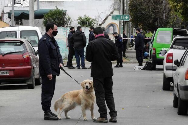 Los perros golden que participan en la búsqueda de Rosa Fernández.