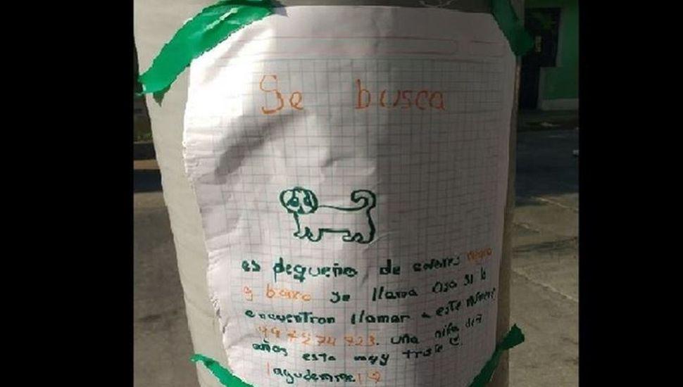 El tierno cartel de una nena de 7 años que busca a su perro perdido