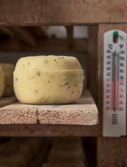 Los parámetros tiempo y temperatura son básicos en la elaboración de quesos.