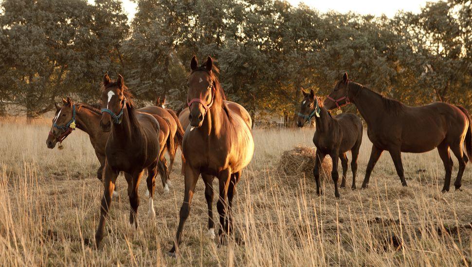 Implementan ficha ganadera para regularizar stock equino en la Provincia