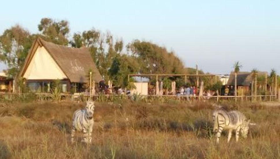 ¡Insólito! En un zoológico español pintaron burros para que parecieran cebras