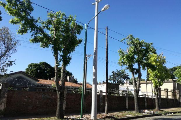 El recambio de luminarias y la poda trajo una mejor calidad de vida para los residentes del barrio El Picaflor.