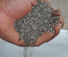 Científicos del Instituto Nacional de Tecnología Agropecuaria (INTA) desarrollaron una escala fenológica que describe el ciclo de crecimiento de la chía.
