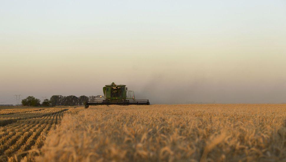 Pese a los retrasos por las lluvias, avanza la siembra de trigo en la Región.