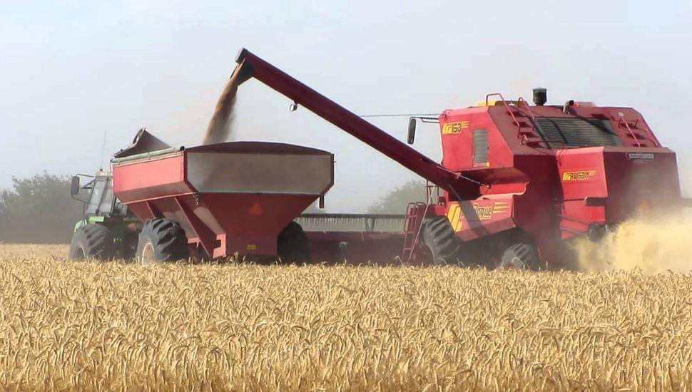 El trigo rindió