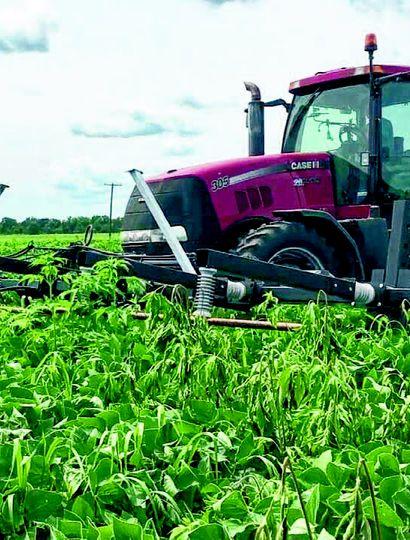 Controlar la situación de malezas eleva el costo de las labores agrícolas.