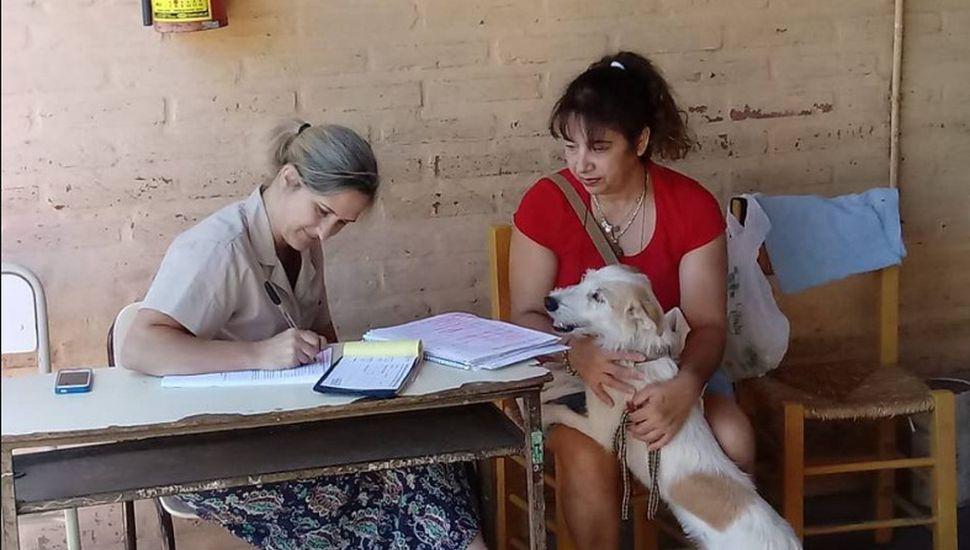 Realizaron una jornada de castración de mascotas en Ameghino