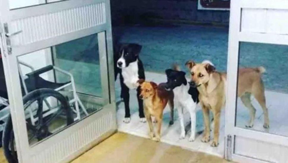 Los cuatro perros que esperan a su dueño en la puerta del hospital