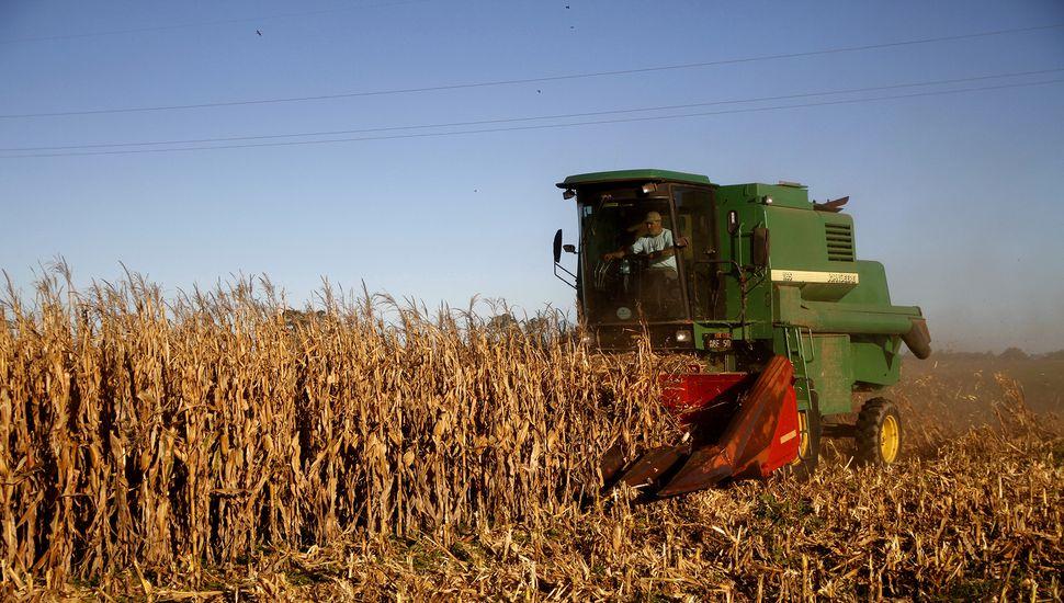 Buenos Aires creció un 17% en exportaciones de cereales