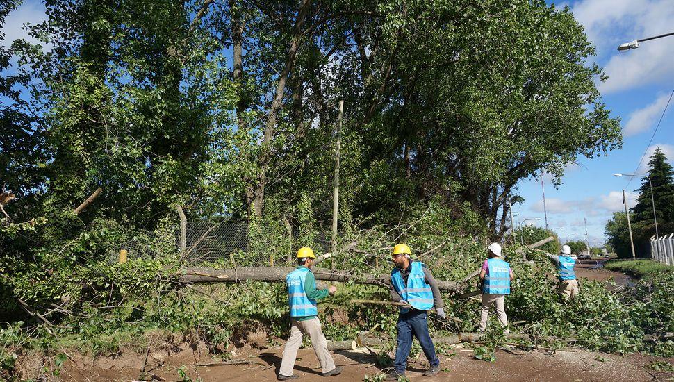 Intenso trabajo por los destrozos que ocasionó la tormenta
