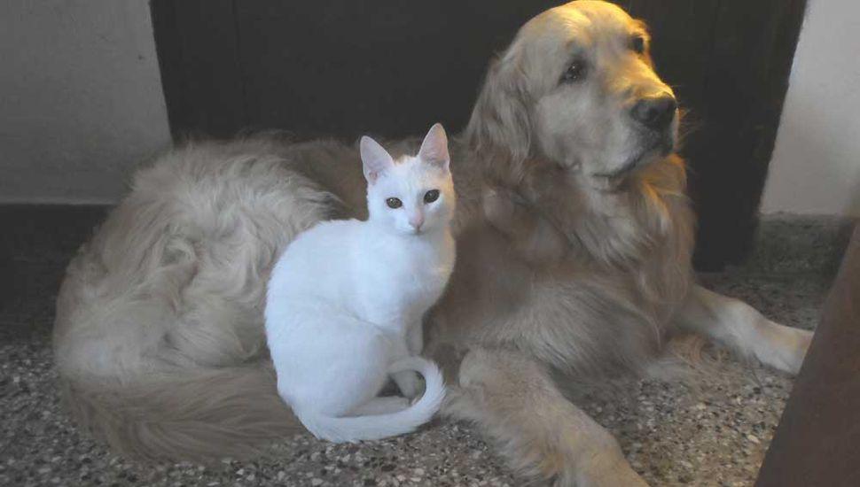 Mascotas en el hogar.