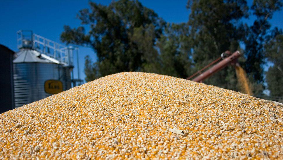 Fuerte comercialización de maíz en la provincia de Buenos Aires