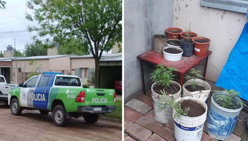 Allanamiento en Ameghino: encontraron 14 plantas de marihuana