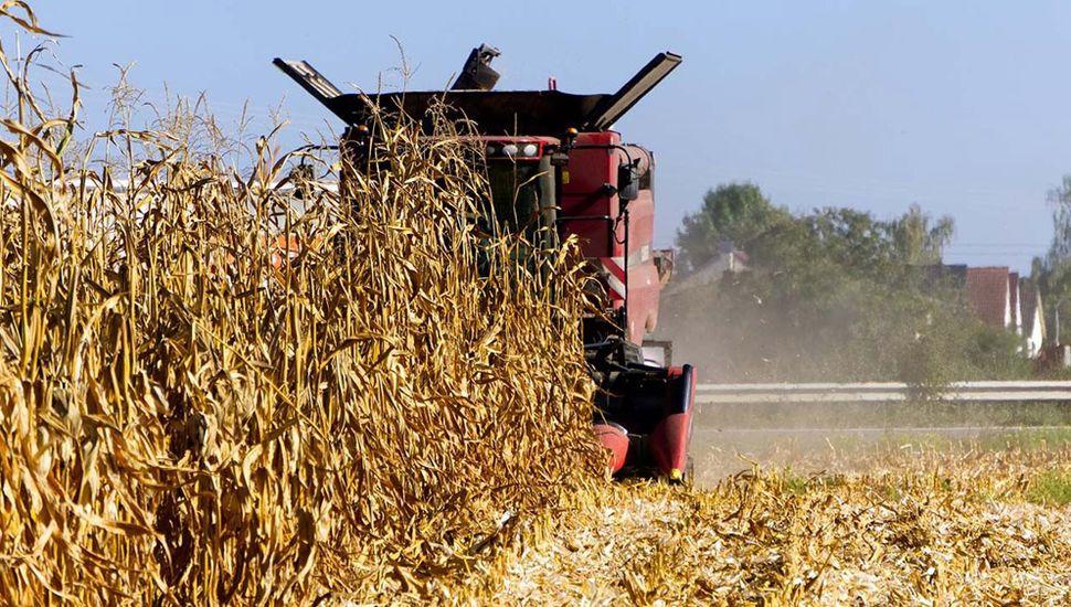 La cosecha gruesa rindió bien pero los precios no aseguran rentabilidad.