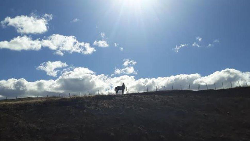 El emocionante rescate de un caballo atrapado en un alambrado