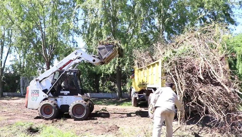 A mitad de semana, el Municipio recolectó ramas en la zona de quintas.