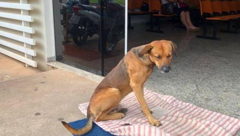 Un perro sigue esperando a su dueño en la puerta del hospital donde murió hace 4 meses