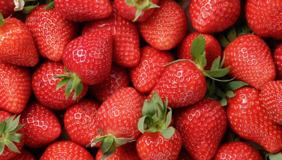La producción de frutillas se extiende en la provincia