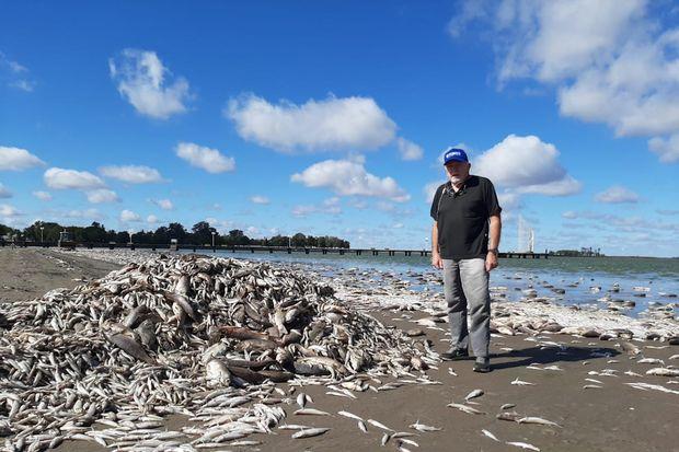 Mortandad de peces en la laguna de Gómez