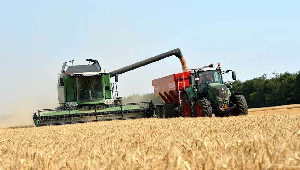 La cosecha de trigo finalizó sin alcanzar los rendimientos esperados.