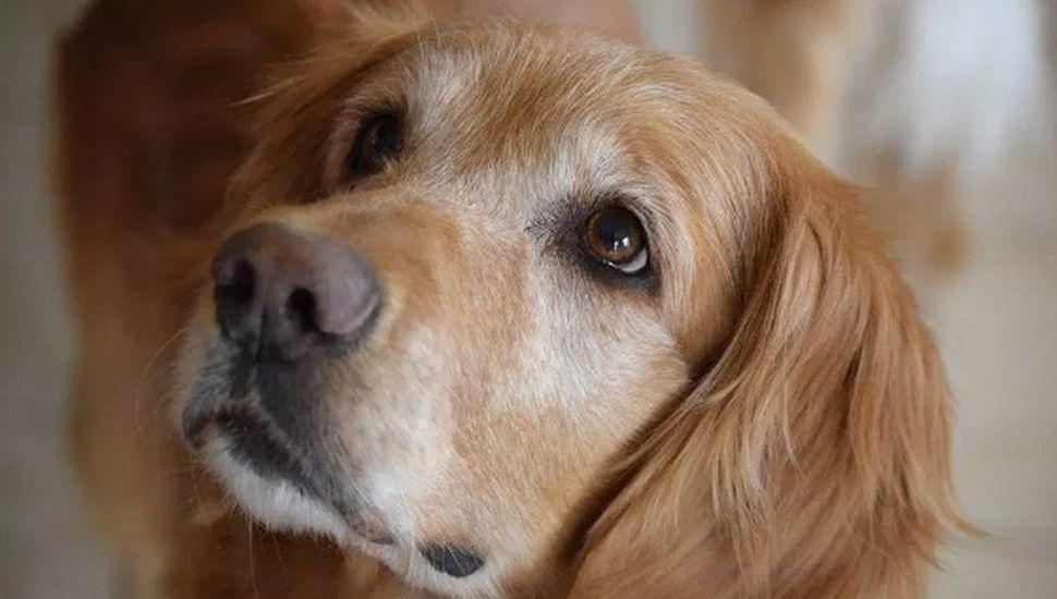 Alerta en Chacabuco por falso veterinario: murió una perrita
