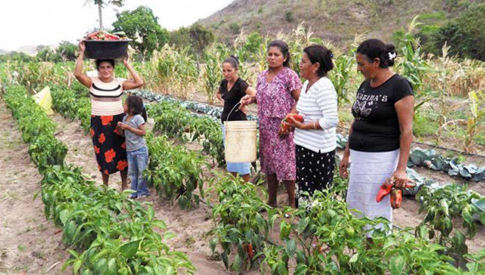 Ayer fue el Día Internacional de la Mujer Rural.
