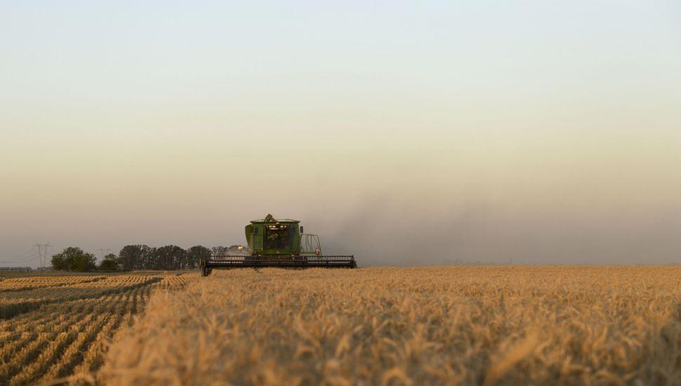 Más de 800 mil hectáreas de trigo se encuentran en condiciones regulares y malas en el país, y Buenos Aires es la provincia más complicada.