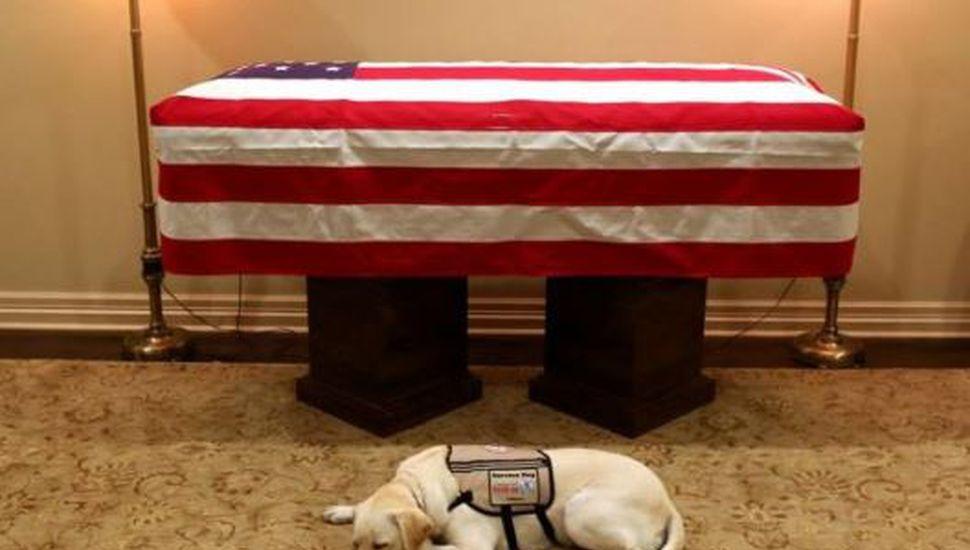 El mundo entero conmovido por Sully, el perro de Bush que no se separa del ataúd