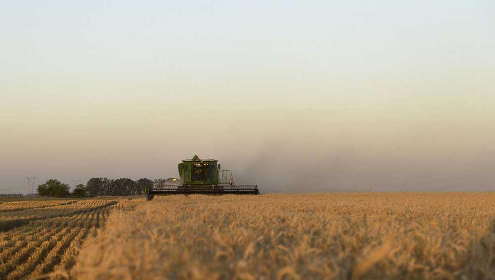 El trigo se vende por adelantado