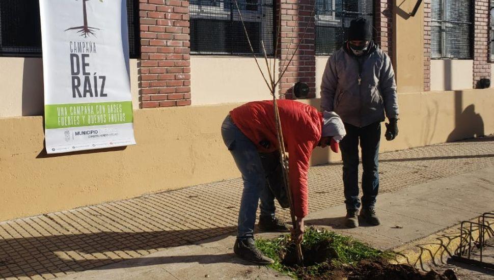 """Programa """"De raíz"""": plantan árboles en la Escuela 8"""