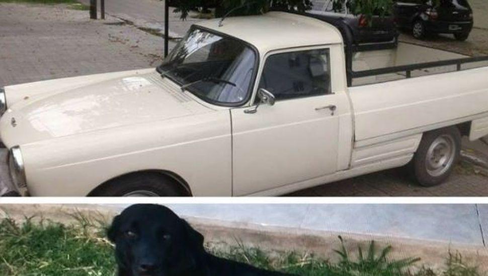 Ofrece su camioneta como recompensa para quien encuentre a su perra
