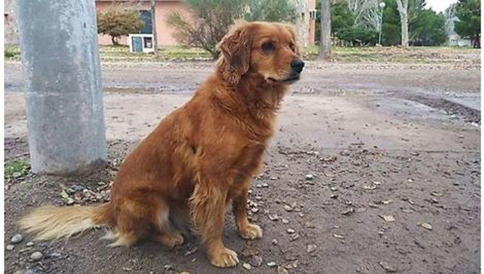 Una perra espera en la comisaría a su dueño preso hace más de un año