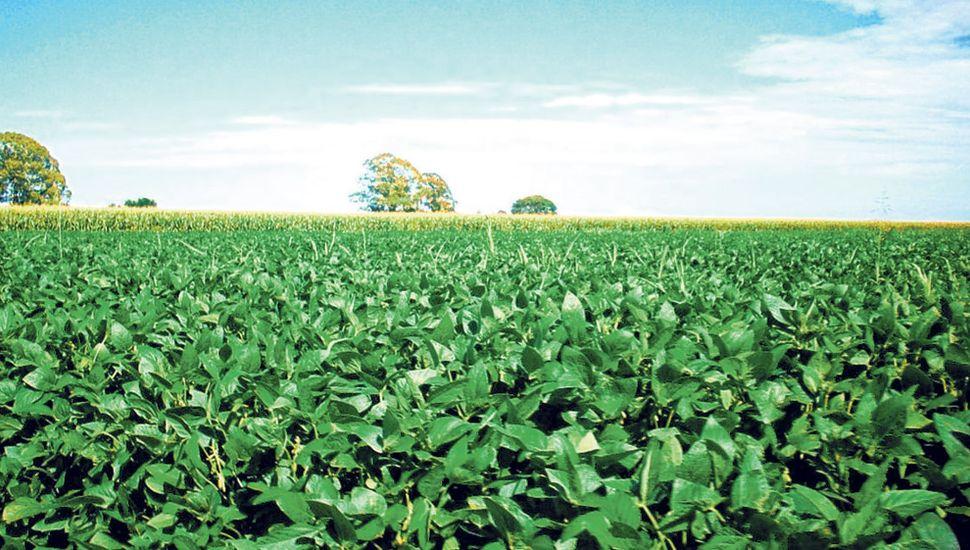 Las condiciones climáticas de la actual campaña permitirían alcanzar una voluminosa cosecha de soja.