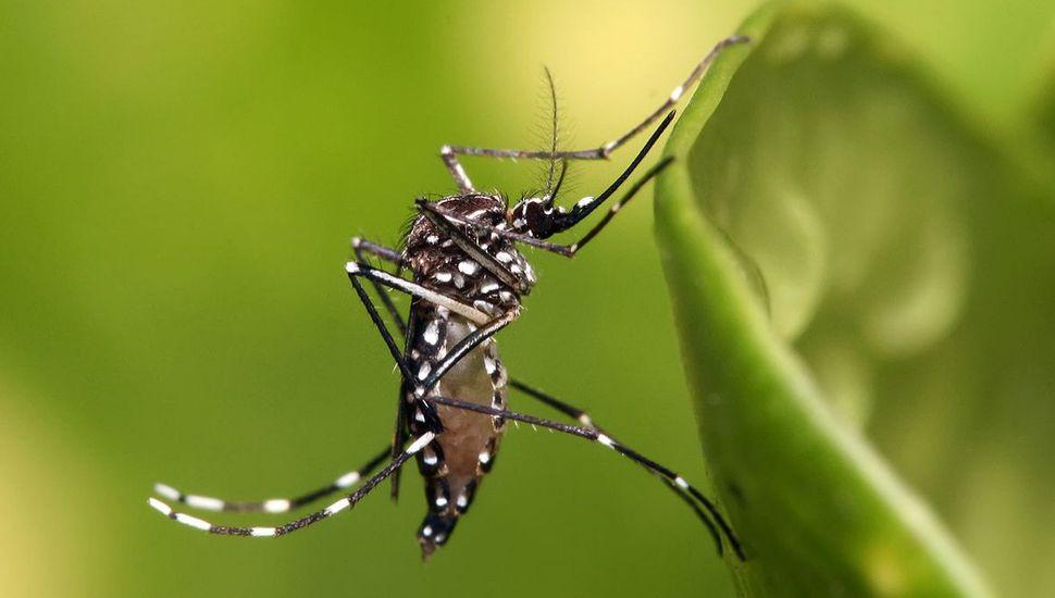 Detectan 1.000 casos nuevos de dengue por semana en Misiones