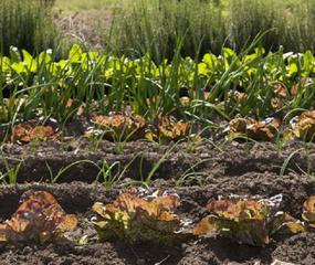 El buen diseño de la huerta orgánica garantiza que sea autosustentable, apoyado en los principios de la agroecología.