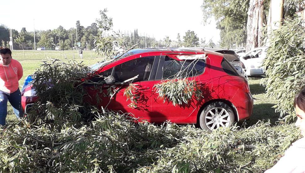 Pudo ser una tragedia: cayó una rama y destrozó un auto en el Parque Borchex