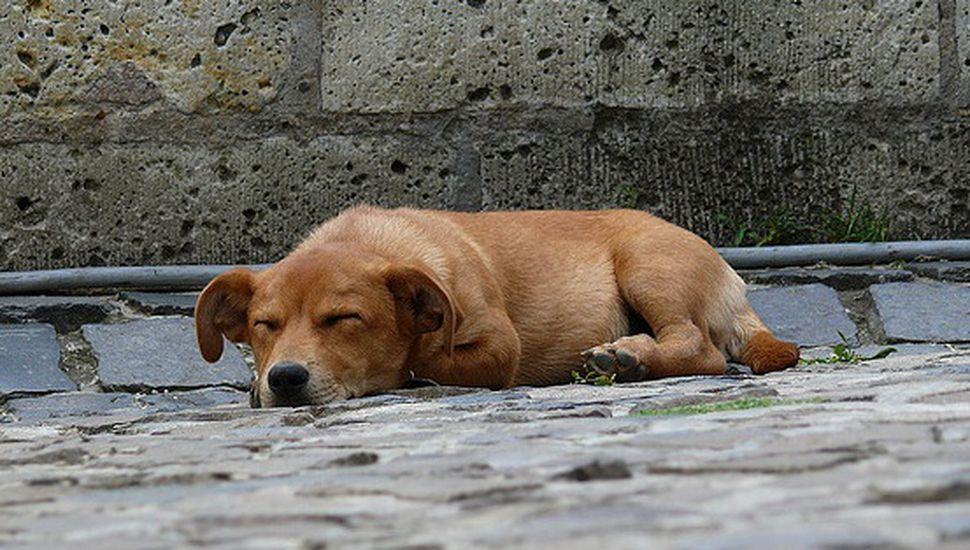 Piden informes sobre presunto envenenamiento de perros en O'Higgins