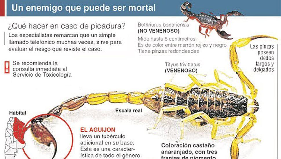 Alerta por la aparición en Junín de los dos tipos de alacranes que habitan la región