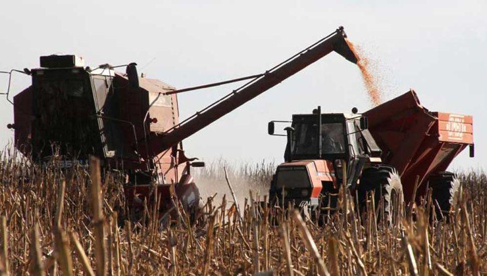 El maíz será el cultivo estrella de la campaña, con una cosecha histórica de 55 millones de toneladas, según el Gobierno.