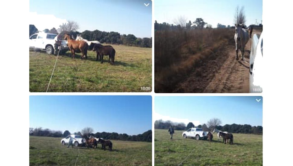 Multan a propietarios de caballos sueltos